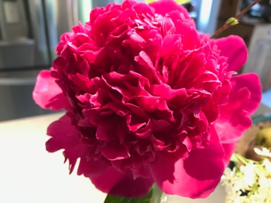 Blog Photo - Garden June 2020 - Garden Deep Pink Peony