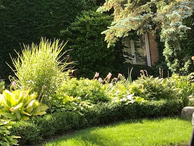 Blog Photo - Garden August - Front garden
